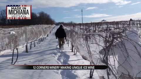 Made in Michiana: 12 Corners uses bitter cold to harvest grapes for Ice Wine