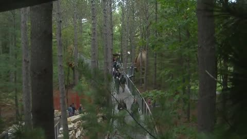 Canopy walk reaching 40 feet high set to open in Michigan