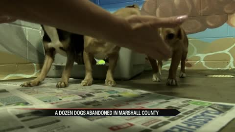 A dozen dogs dumped in rural Marshall County