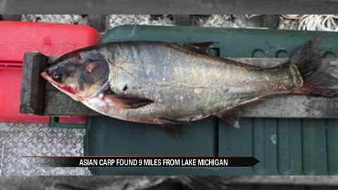 Asian carp found near Lake Michigan