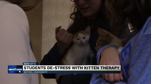 Bethel partners with Pet Refuge for finals week 'kitten therapy'