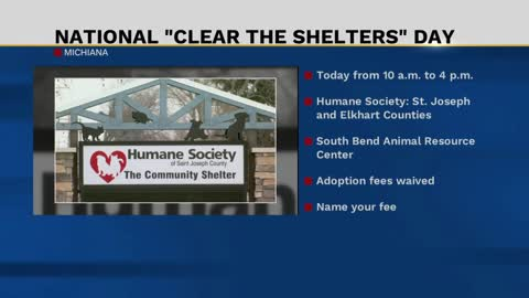 Help local animal shelters by adopting a fury friend