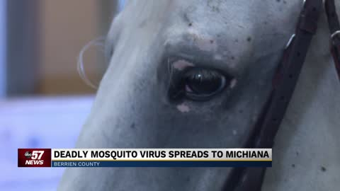 Deadly mosquito virus spreads to Michiana