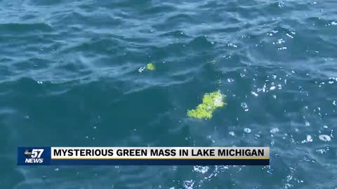 Resident reports seeing algae bloom just off Berrien County