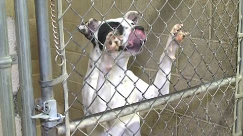 Elkhart Humane Society hosts open house for new facility