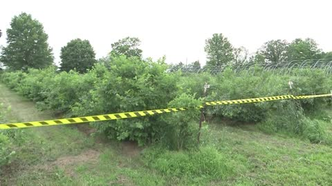 Local orchard says all of our rain hasn't impacted fruit crops...