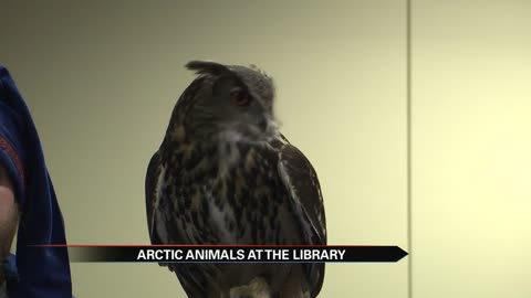 Library hosts Animals of the Arctic Circle