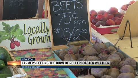 Local farmers hurt by extreme temperatures and rainy conditions