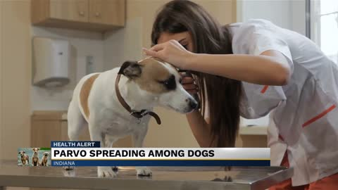 Local veterinarian warns of deadly virus affecting dogs in Michiana