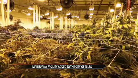 Niles marijuana growing facility enters next phase of approval...