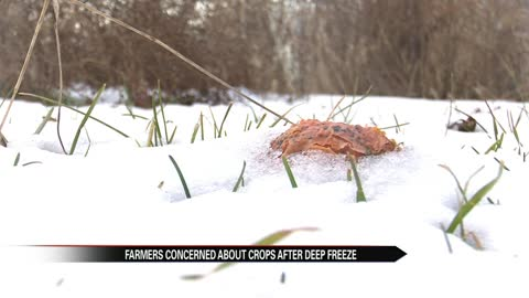 Michiana farmers concerned about crops after deep freeze