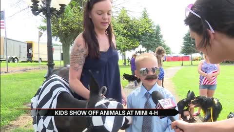 Mini 4-H gives young kids the chance to show animals