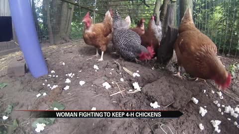 North Judson family fights to keep their 4-H chickens
