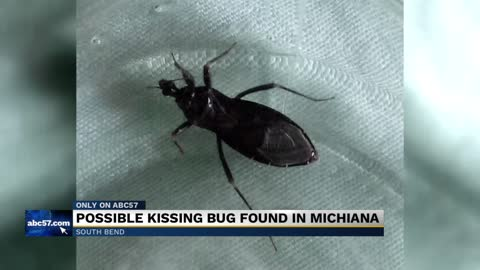 Possible kissing bug found in South Bend