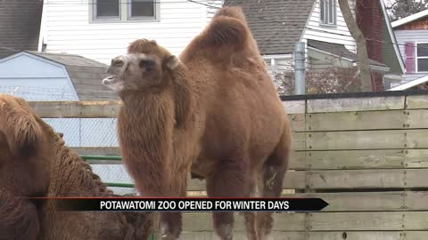 Potawatomi Zoo opens for winter day
