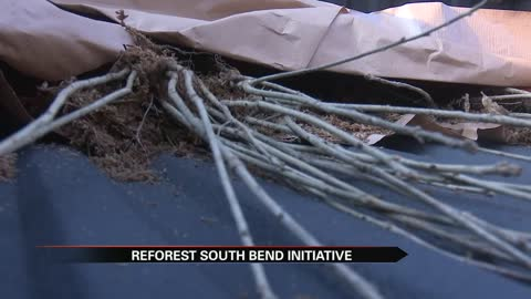 Group working to reforest South Bend