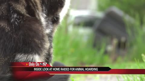 South Bend woman accused of hoarding close to 30 cats