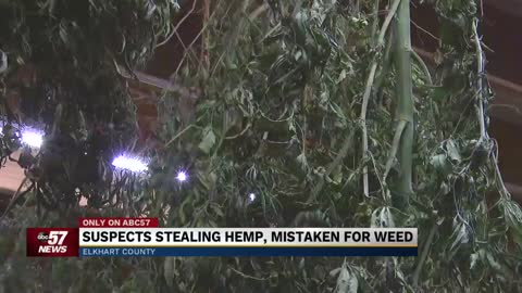 Suspects steal hemp plants, mistaken for marijuana