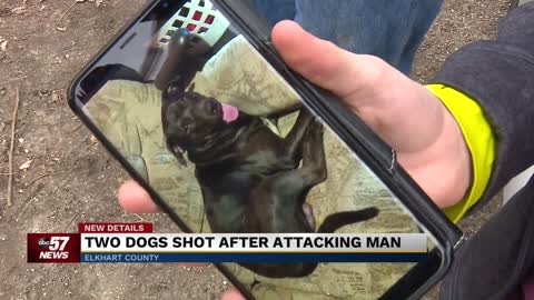 Two dogs shot after attacking man