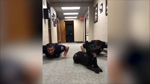 K9 does push-ups along with officers