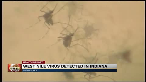 West Nile Virus detected in Elkhart