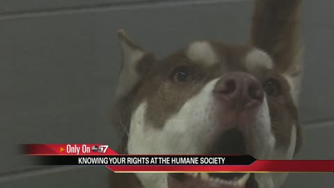 with hundreds of missing animals at humane society searching can be hard 6 pm