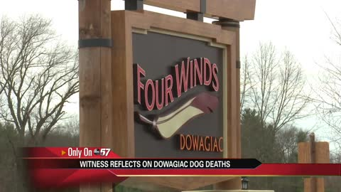A woman reflects on Dowagiac dog deaths