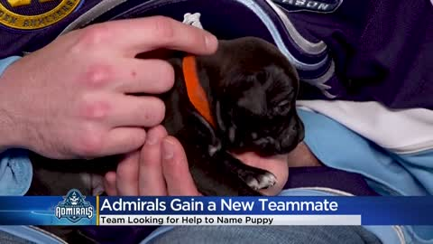 Milwaukee Admirals ask for help naming new puppy