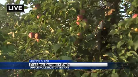 Fresh summer fruit is perfect for the pickin' at Apple Holler in Racine County