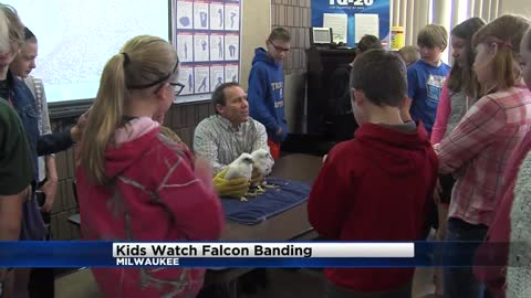 Waukesha 6th graders get to name the new We Energies baby falcons