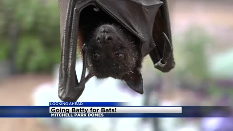 Wisconsin Bat Festival coming to Mitchell Park Domes