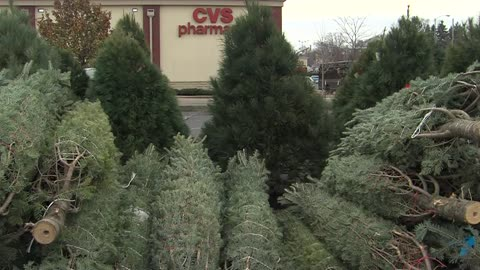 Christmas tree shopping now in full swing amid possible tree shortage