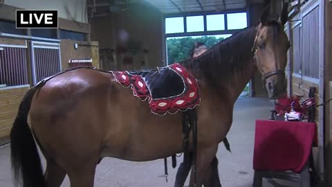 "Feel like horsin' around?  Go see ""The Dancing Horses"" in Delavan"