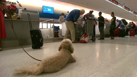 Delta sets new rules for service and support animals after safety risks on flights with untrained animals