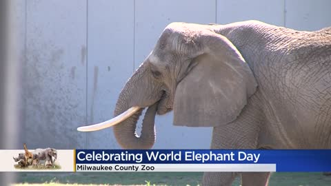 Milwaukee County Zoo celebrating World Elephant Day on Friday