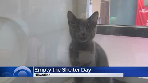 MADACC adopts out 75 cats, 15 dogs during 'Empty the Shelter'...