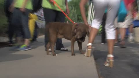 10th annual Feasting for Fido raises more than $20,000 for Wisconsin Humane Society