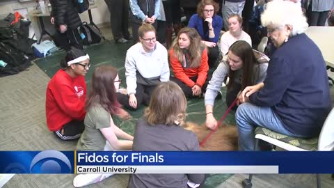 Cute dogs soothe students, staff at Carroll University during...