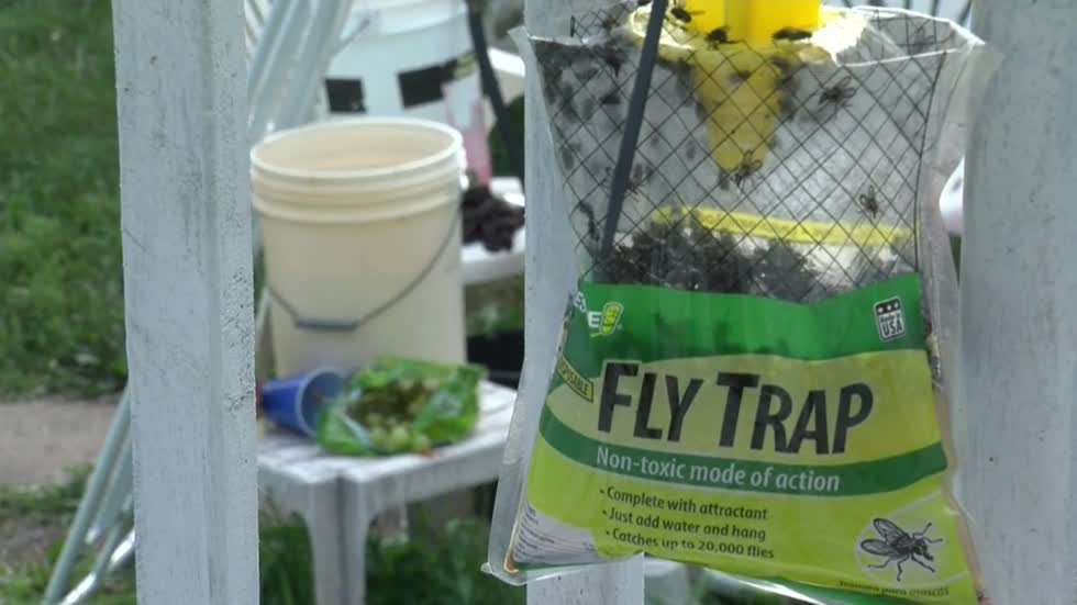 Cudahy man's messy habits lead to pest problem, fly infestation in