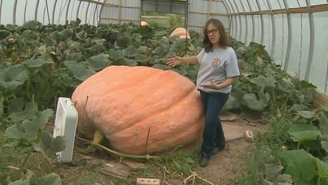 Couple grows giant pumpkins in Fond du Lac County