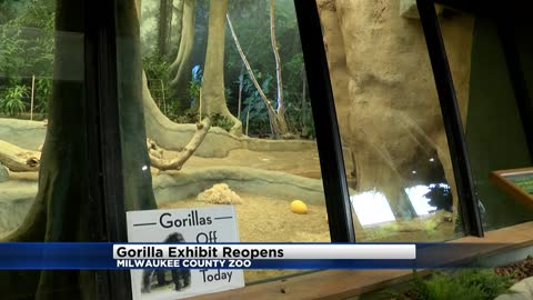 Gorilla exhibit reopens at Milwaukee County Zoo following death of two gorillas