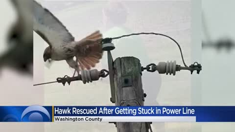 Hawk rescued after getting stuck in power line in Washington County
