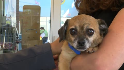 Wisconsin Humane Society gets 25 animals after evacuated from Florida shelter