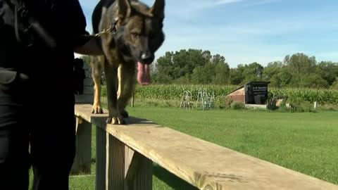 Lomira Police Department fundraising for K-9 officer