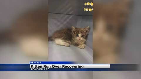 Kitten named 'Purrito' recovering after being run over and found in Taco Bell parking lot