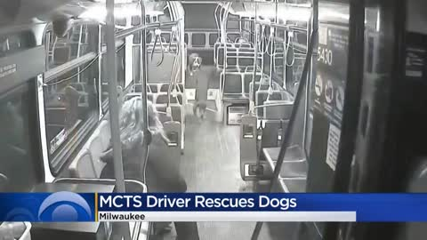 MCTS driver finds lost dogs, helps reunite them with owner