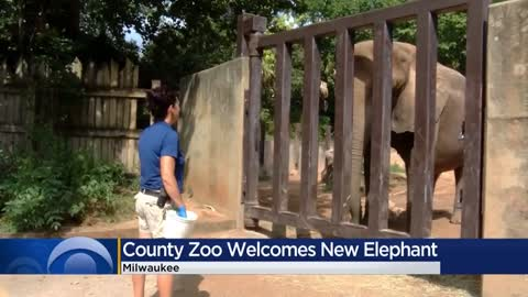 Milwaukee County Zoo prepares to welcome new elephant