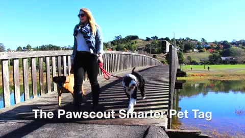 Smart pet tag allows owners to track dogs, create community