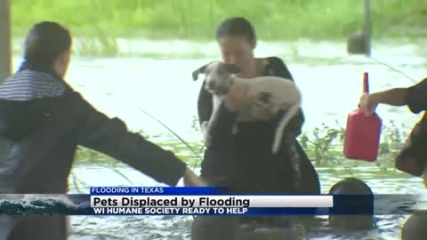 Wisconsin Humane Society ready to help pets displaced by flooding