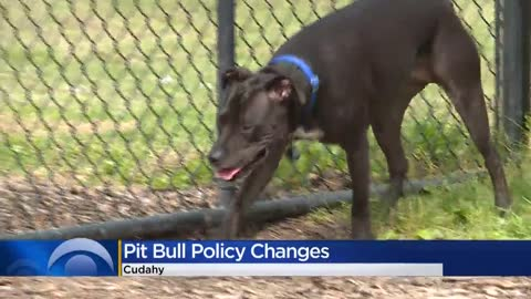 Cudahy lifts pit bull restrictions